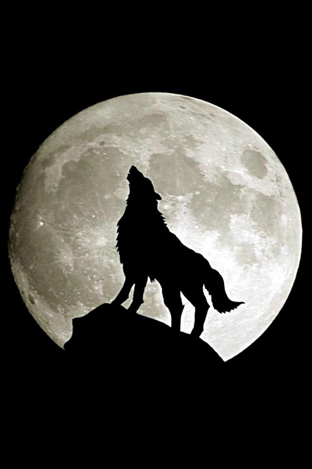 howling-wolf-iphone-wallpaper_dcd7458372f7f8f33010fa54c654f312_raw