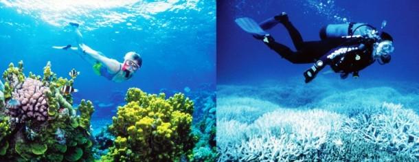 korall
